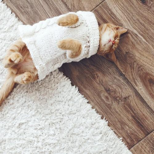 Cat on hardwood floor | Lake Forest Flooring